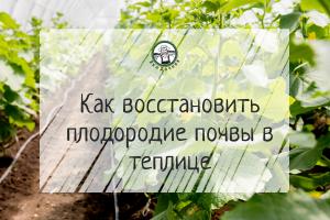 Как восстановить плодородие почвы в теплице