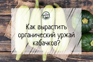 Как вырастить  органический урожай кабачков