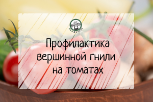 Профилактика вершинной гнили на томатах