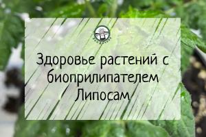 Здоровье растений с биоприлипателем Липосам